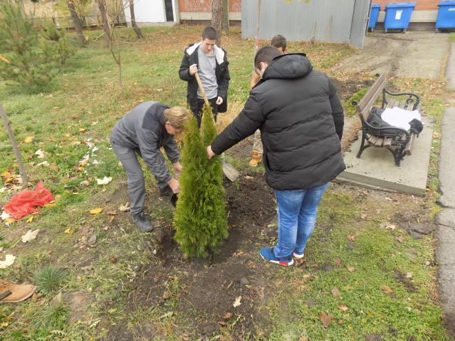 Озелењавање школског дворишта